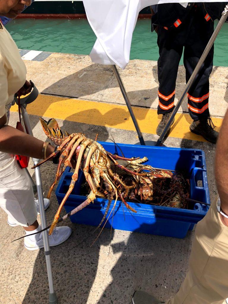 Tripcaraibes à antigua barbuda port langouste